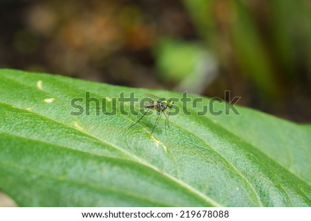 fruit fly  sitting on a blade of grass with green foliage background - stock photo