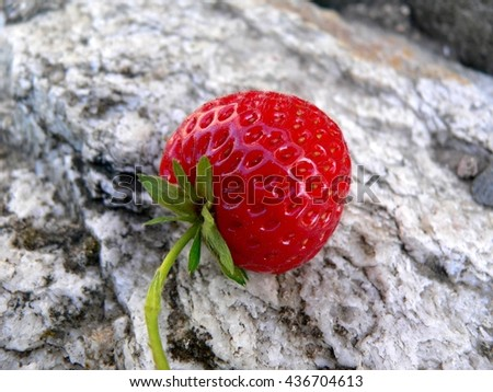 fruit red ripe strawberry lying outdoors on a stone