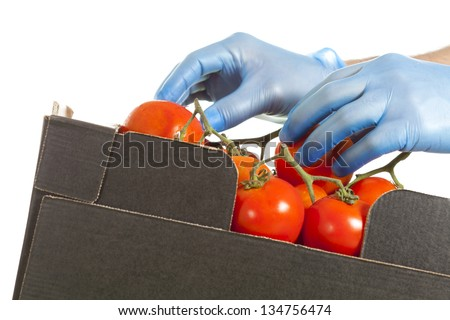 Fruiterer placing a few tomatoes in a box for his sale - stock photo