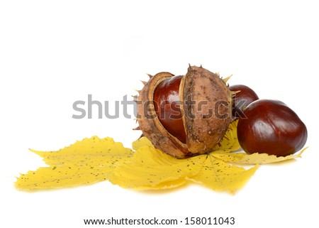 Fruits and leaves of chestnut on a white background