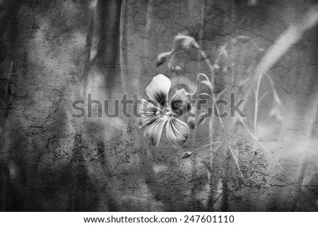 fruits blossom spring, black and white - stock photo