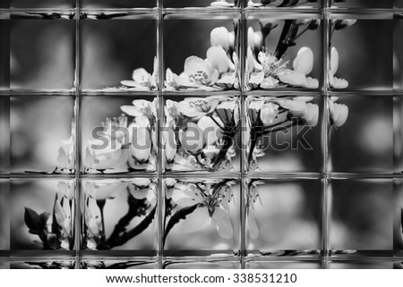 fruits blossom, spring through window panes black and white