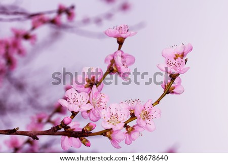 Fruits in Bloom 3 - stock photo