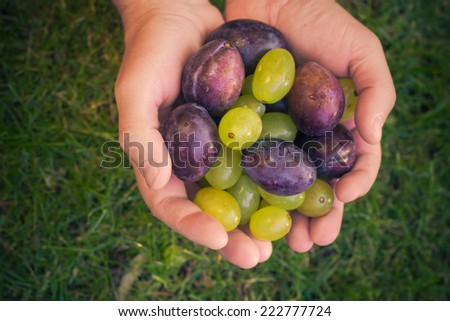 Fruits in her hands: plums and grapes in the light of the sun - stock photo