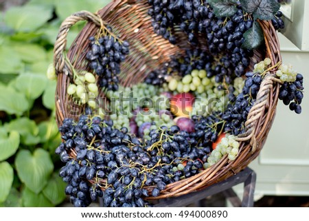 Fruits in the basket - grapes, peaches, plums