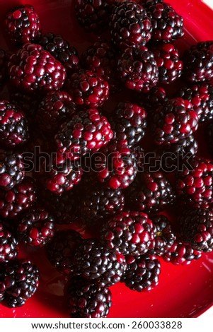 Fruits of the forest:  blackberries. Healthy breakfast food. On red plate. - stock photo