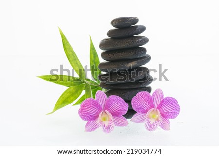 Fuchsia Dendrobium orchids with water droplets on black stones close up  - stock photo