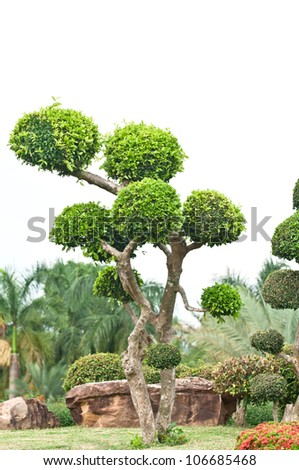 Fukien Tea Tree (Carmona retusa ) Ornament Plant in The Garden
