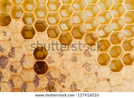 full and empty honeycomb close up - stock photo