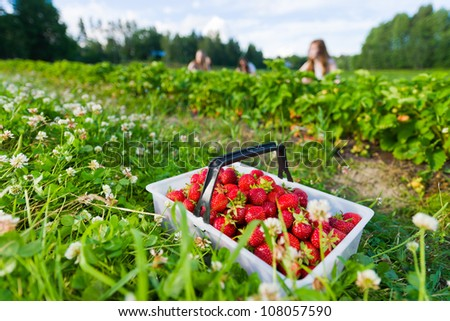 Full basket of strawberries. Focus on basket and group of girls behind, horizontal format