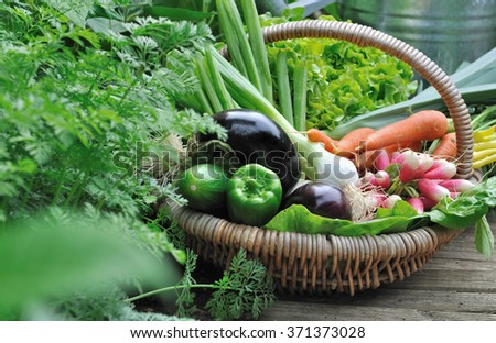 full basket with fresh vegetables from garden - stock photo