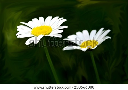Full bloom of roman chamomile flower in flower garden - stock photo