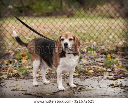 Dog Barks At Empty Food Bowl