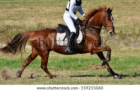 Full body side view of a beautiful chestnut horse in motion being ridden on a cross country course in nature.