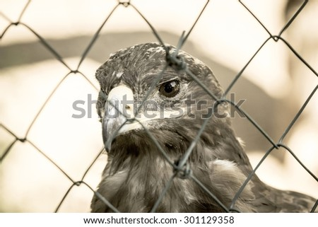 full face of the head of an eagle with the bent beak and a big open eye behind the metal gauze of old beige tone - stock photo
