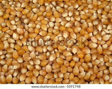 Full frame color photograph of yellow popcorn kernels.