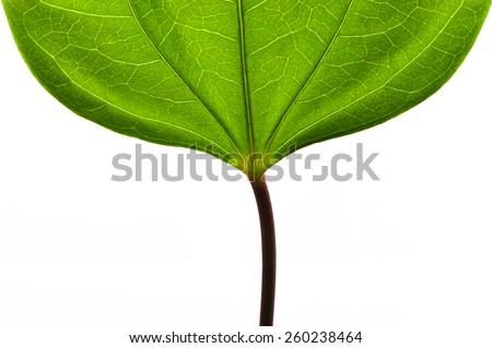 Full Frame Green leaf background . - stock photo
