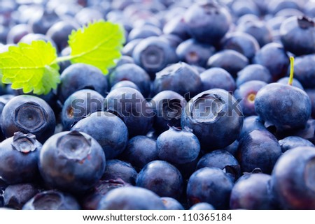 Full frame image of a large group of fresh blueberries with balm leaves. Small depth of field. - stock photo