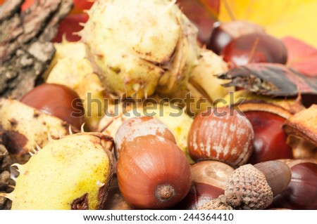 Full frame of autumn decorations including acorn, chestnuts and wood bark - stock photo