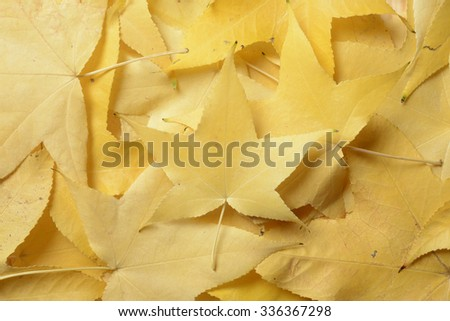 Full frame picture of autumn yellow leaves