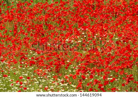 Full frame take of a field full of poppies