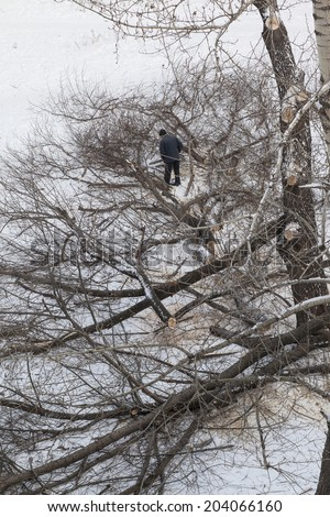 Full length Man standing on snow drift and cutting fallen winter snowy tree with chainsaw Copy space for inscription - stock photo