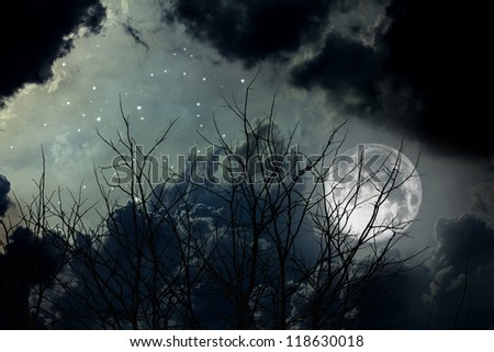full moon and died trees