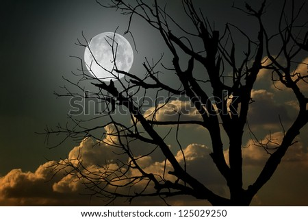 full moon and died trees - stock photo