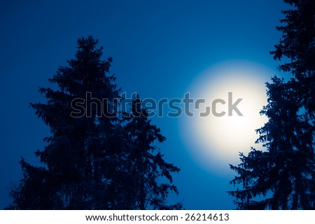 Full moon over conifers at night, toned black and white - stock photo