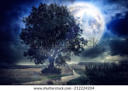 Full moon over corn field - stock photo