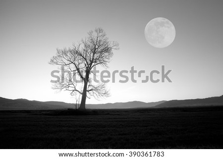 full moon over the oak tree, abstract black and white background