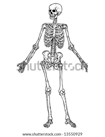 full skeleton image
