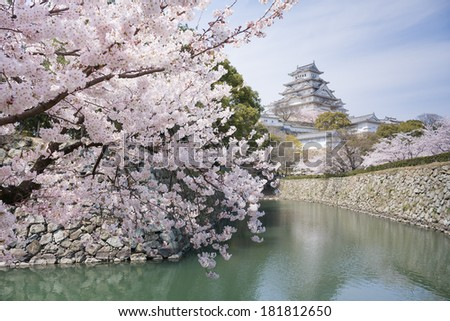 Fully blooming Japanese cherry blossoms and a UNESCO World Heritage castle - stock photo