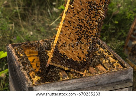 fully honeycomb of honey removed from the very old hive