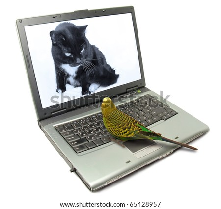 Fun animals concept: Parrot and cat chatting on internet