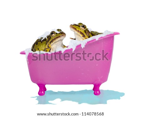 Fun image of two cute pet frogs enjoying a soapy bubblebath in a bright pink bathtub with overflowing water isolated on white - stock photo