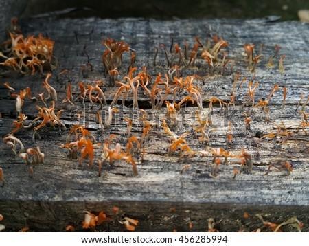 Fungi, Fungus spread on wooden bark texture, nature background - stock photo