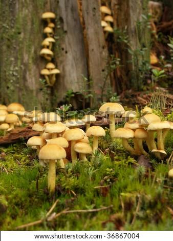 Fungus mushroom on a tree stump - stock photo