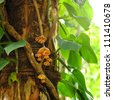 Fungus on a tree. - stock photo