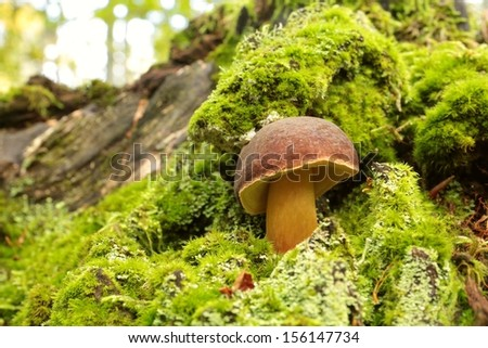 Fungus on a tree stump covered with moss - stock photo