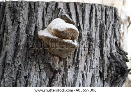 fungus parasite on the tree. Spring in the forest - stock photo