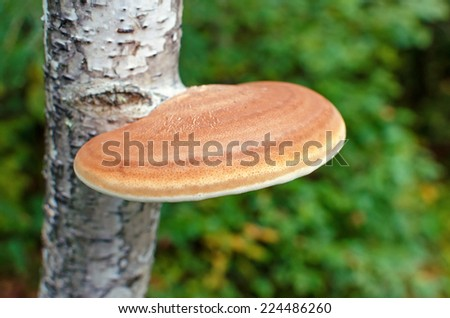 fungus tree - stock photo