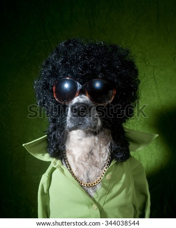 Funky dog - stock photo
