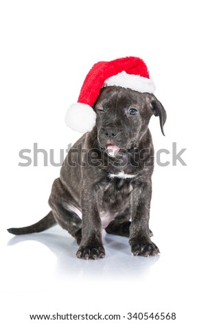 Funny american staffordshire terrier puppy dressed in a christmas hat - stock photo