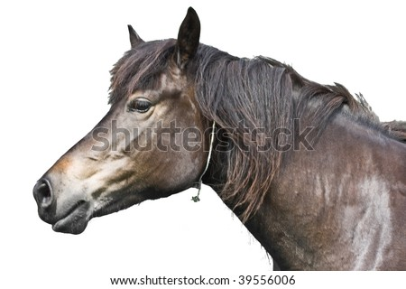 Funny and beautiful Horse head isolated on white - stock photo