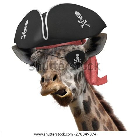 Funny animal picture of a cool giraffe wearing a pirate hat and eyepatch with crossbones - stock photo