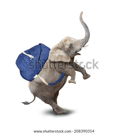 Funny baby elephant with backpack going to school. - stock photo