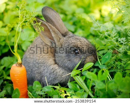 Funny baby gray rabbit with a carrot on grass - stock photo