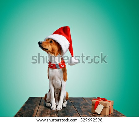 Funny beautiful shy basenji dog wearing christmas santa claus hat looking on side and sitting next to craft gift box with tied with red tape and yellow small address tag, isolated on green background