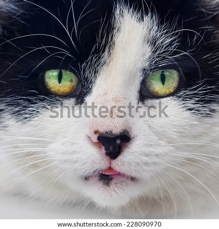 funny black and white cat on the roof of the car - stock photo